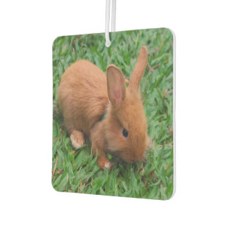 Baby Bunny Car Air Freshener