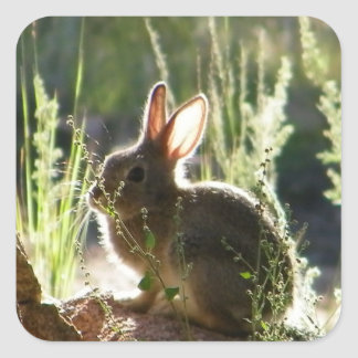 Baby bunny! square sticker
