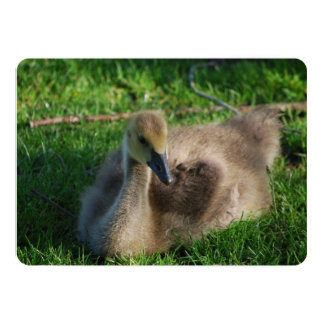 Baby Canadian Geese 13 Cm X 18 Cm Invitation Card
