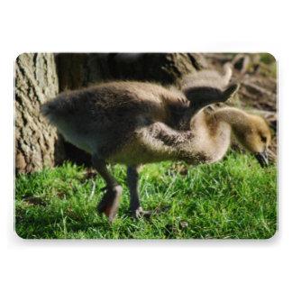 Baby Canadian Geese Custom Invite