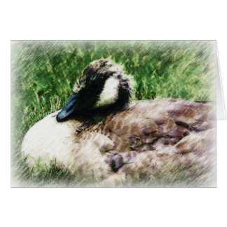 Baby Canadian Goose Photo Sketch Greeting Card