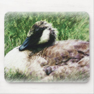 Baby Canadian Goose Photo Sketch Mouse Pad