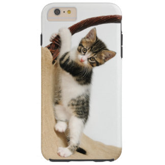 Baby cat, cute kitten climbing tough iPhone 6 plus case