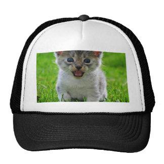 Baby Cat Hats