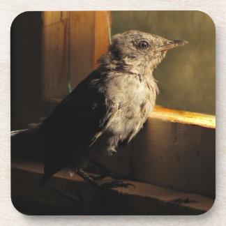 Baby Catbird Coasters