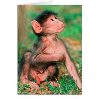 Baby Chacma Baboon (Papio Ursinus) Card