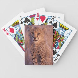 Baby Cheetah Playing Cards