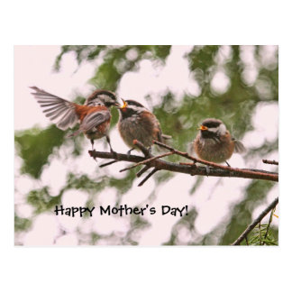 Baby Chickadees and Mother Bird Post Card