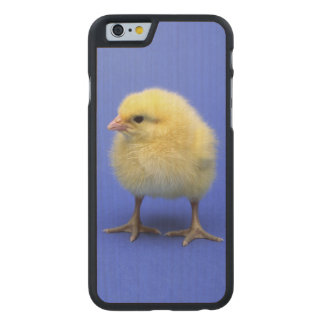 Baby chicken. carved® maple iPhone 6 slim case