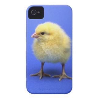 Baby chicken. Case-Mate iPhone 4 case