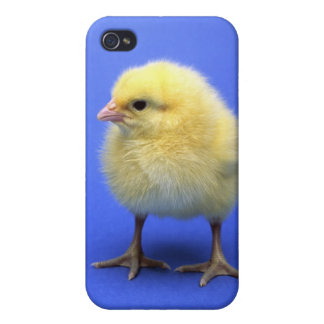 Baby chicken. covers for iPhone 4