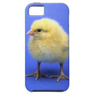 Baby chicken. iPhone 5 case