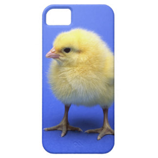 Baby chicken. iPhone 5 cover