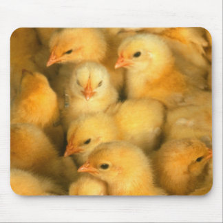 Baby chicks mouse pad