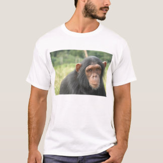Baby Chimp T-Shirt