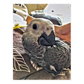 Baby Congo African Grey Parrot Postcard