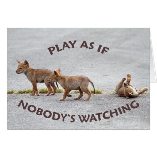 Baby Coyotes Playing Card