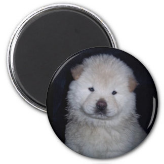 Baby Cream Chow Chow Magnet