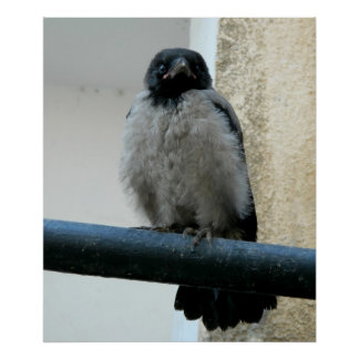 Baby crow print