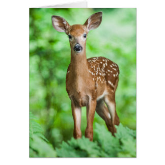 Baby Deer Fawn Bambi in the Forest Card