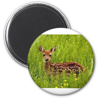 Baby Deer Fawn Magnet