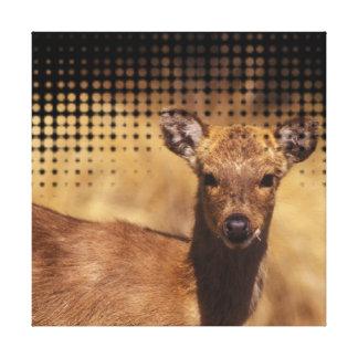 Baby Deer Wall Portrait Canvas Prints