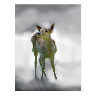 Baby deer's curiosity post card