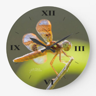 Baby Dragonfly Lit By The Sun Wall Clock by Julie
