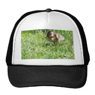 Baby duck trucker hats
