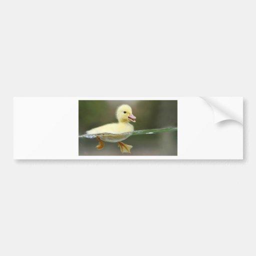 baby duck swimming cute bumper sticker