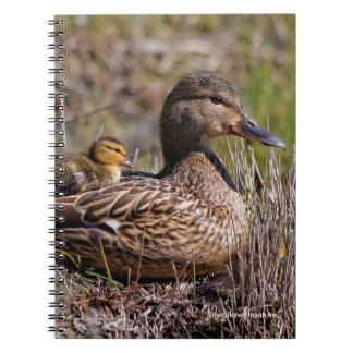 Baby Duck with Mallard Mom Notebooks