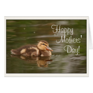 Baby Ducks Ducklings Animals Wildlife Mothers Day Card