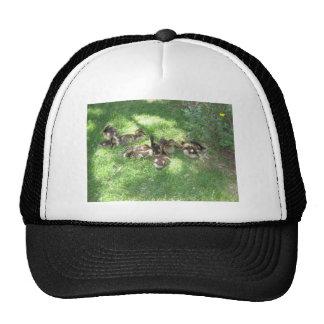 baby ducks trucker hat