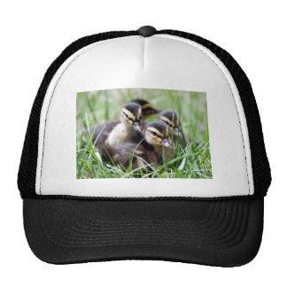 Baby Ducks Mesh Hat