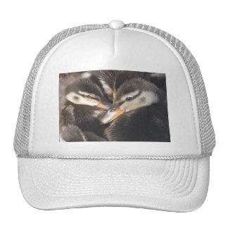 baby ducks hat