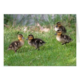 Baby Ducks Photo Card