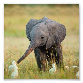 Baby Elephant and Birds Photographic Print