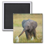 Baby Elephant and Birds Square Magnet