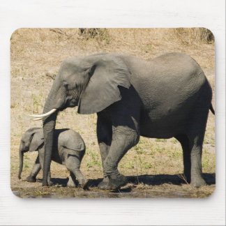 Baby Elephant And Mother Mouse Pad