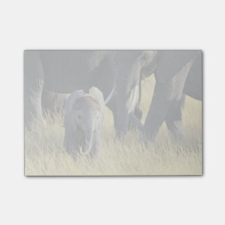 Baby Elephant Post-it Notes