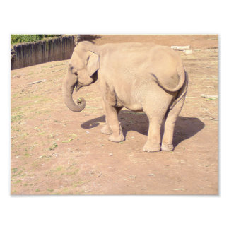 Baby Elephant Print 10x8.5 Photo Art
