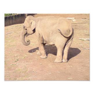 Baby Elephant Print 14x11 Photo Print