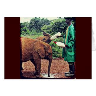 Baby Elephants - Feeding Time Greeting Card