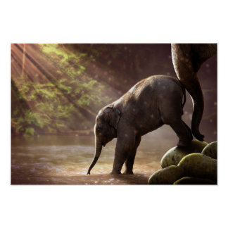 Baby Elephant's First Bath Poster