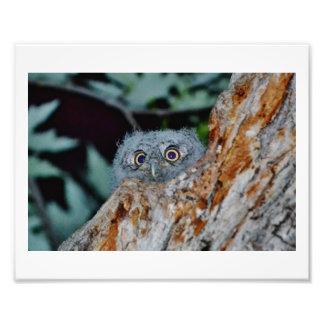 Baby eyes photo