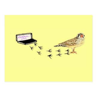 Baby Finch's Foot Prints Postcard