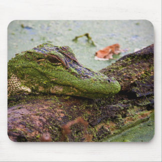 """""""Baby Gator"""" Mouse Pad"""