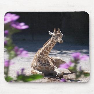 baby giraffe mouse mat