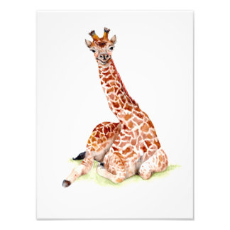 Baby Giraffe Photo Print