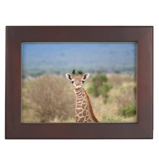 Baby giraffe picture, Kenya, Africa | Memory Boxes